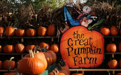 The 24th Annual Fall Festival at the Great Pumpkin Farm in Clarence Kicks off with Armed Forces Weekend
