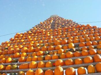 Pumpkins 07