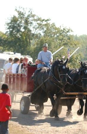 horse hayride2
