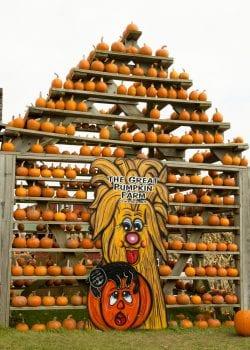 Pumpkins 09