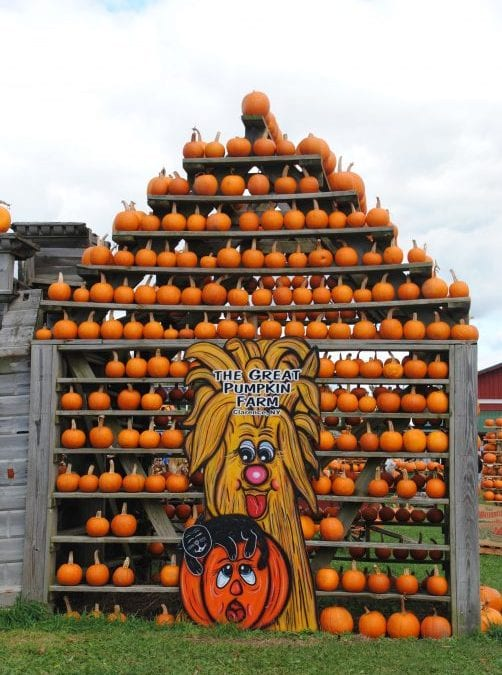 Photos from Weekend #3 Activities at the Great Pumpkin Farm