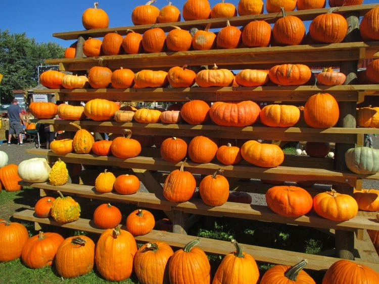 The Final Weekend of the Great Pumpkin Farm's Fall Festival Includes Costume Contests, Music, Balloons and Zillions of Pumpkins!