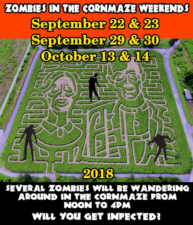 Zombies in Cornmaze